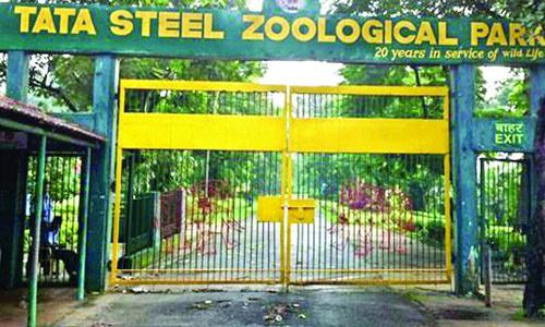 tata-steel-zoological-park